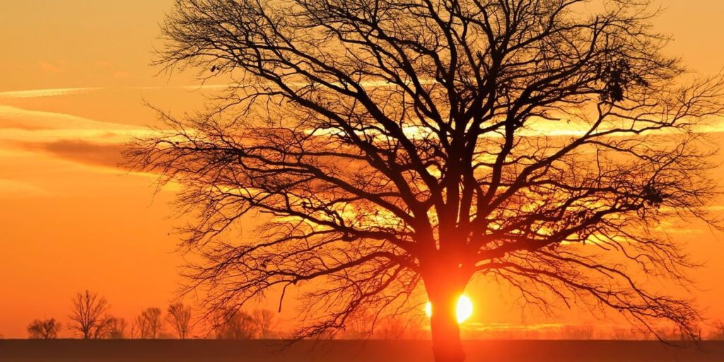 A Righteous Branch I Daily Walk Devotion