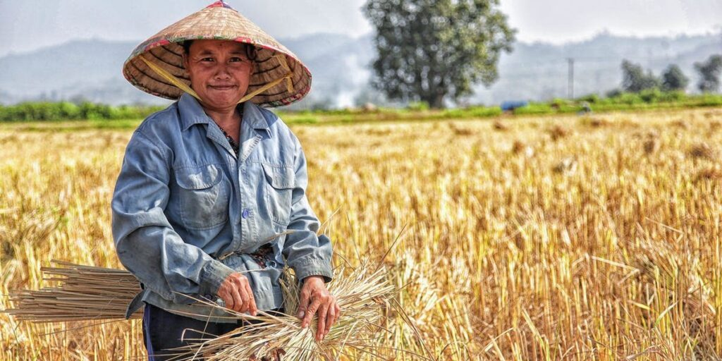 The Harvest is Ready I Daily Walk Devotion