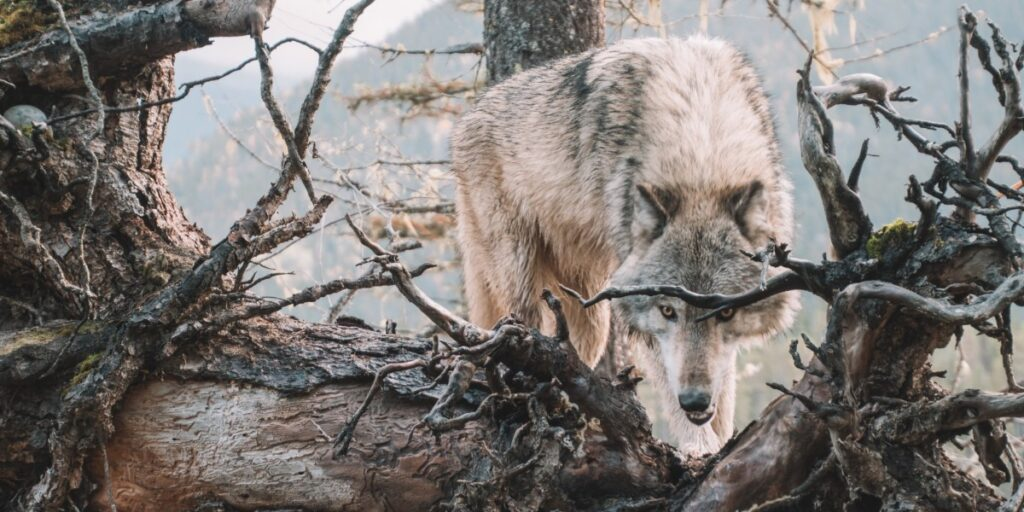 Wolves in Sheeps Clothing I Daily Walk Devotion