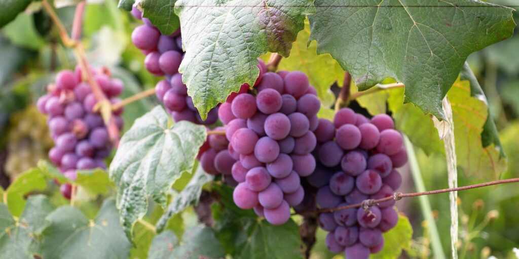 Abiding in the Vine I Daily Walk Devotion