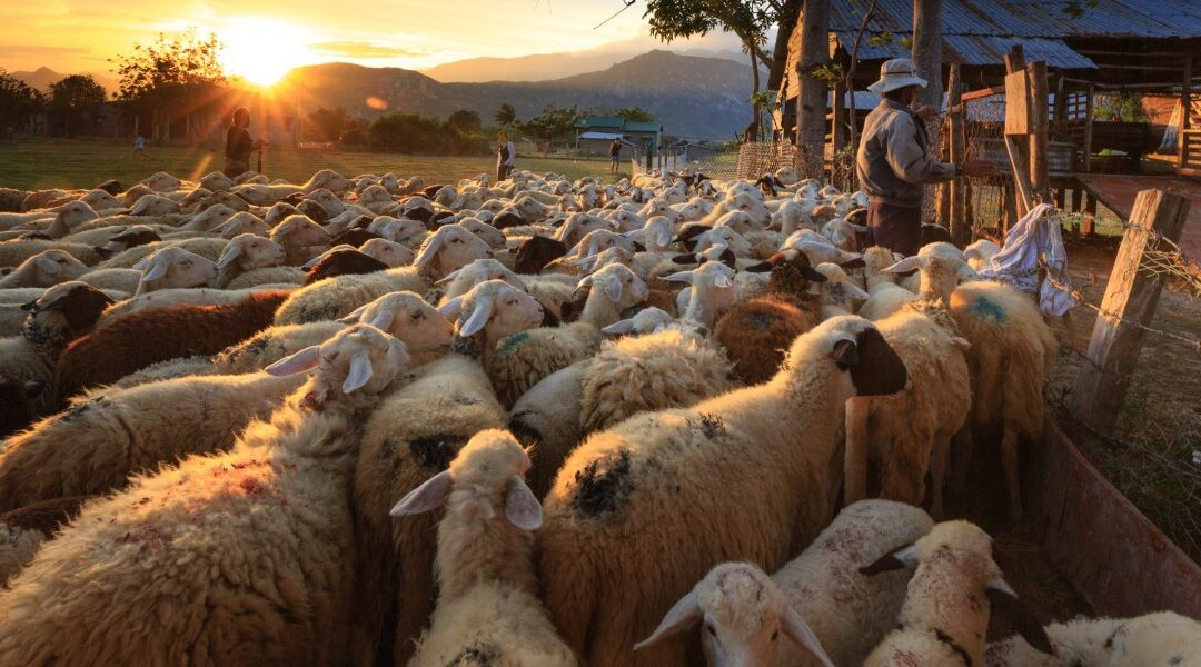 Following the Flock